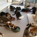 chatsqui mangent