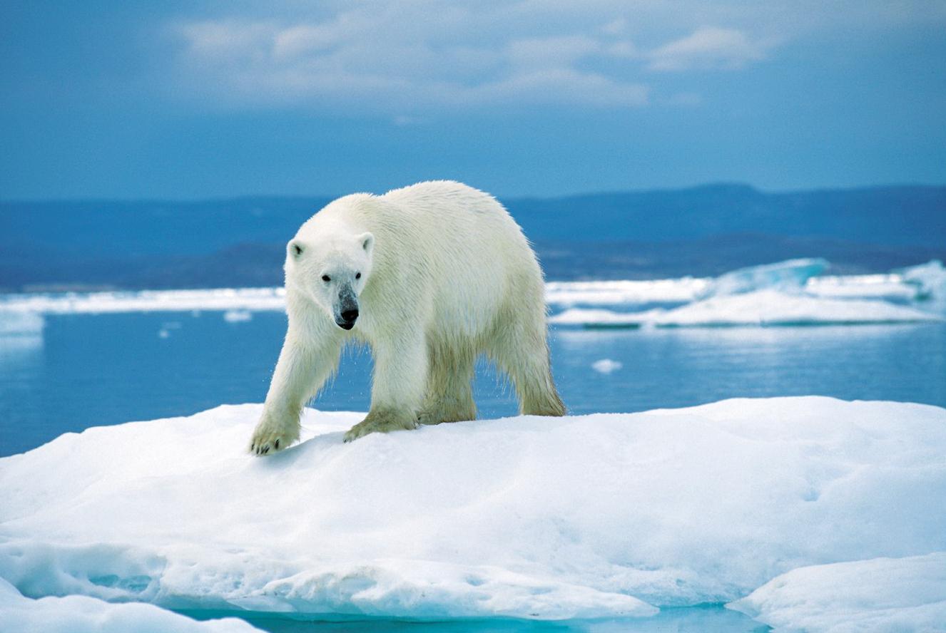 l ours polaire au tableau de chasse du wwf luce lapin et copains. Black Bedroom Furniture Sets. Home Design Ideas